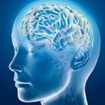 20151120_causes-neuro